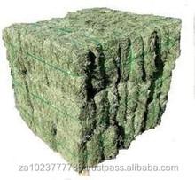 Premium Alfalfa Hay bales Grade A HOT SALES