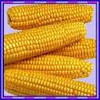 /product-tp/animal-feed-maize-50014330301.html