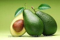 Fresh Avocado Fruits South African Crop for sale