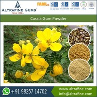 Cassia Gum Powder from Halal and ISO Certified Supplier