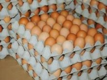 High Quality Organic Fresh Chicken Table Eggs & Fertilized Hatching Eggs at moderate prices
