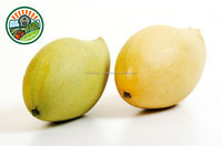 Best Frozen Mango ( cheek, dice, chunk, stick, puree..) in Viet Nam