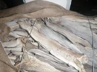 Mackerel Fish, Herring Fish ,Dry Stockfish