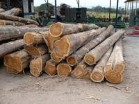 Teak logs from Ivory Coast, Ghana, Benin, Togo, eo.