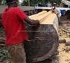 MAHOGANY ACAJOU D'AFRIQUE Khaya Iivorensis LOGS or TIMBER - LUMBER - BOARDS