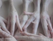 Frozen Chicken Paws-Frozen chicken feet to Hong Kong
