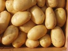 Fresh Farm Potatoes