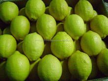 Fresh Citius fruits Fresh Lemon (Grade A) FOR SALE