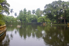 Natural Water Bacteria that keeps Pond clean and free of Algae