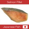 High quality Hokkaido frozen lightly salted fresh salmon fillet