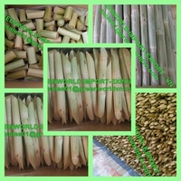 BEST PRICE OF SUGAR CANE WITH HIGH QUALITY FROM VIETNAM