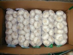 Fresh White Garlic for Hot Sale