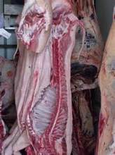 BEEF / FOREQUARTER CARCASSES