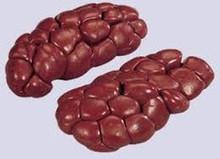 Grade A Frozen Beef Kidneys
