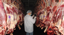 Sheep/ Mutton- whole carcass