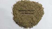 Exporters of Cumin Seeds