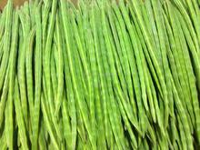 Indian Drumstick Moringa Vegetable