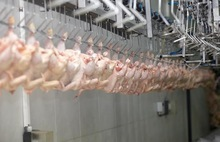 Halal Beef, Chicken & Poultry Meat Supplier Exporter