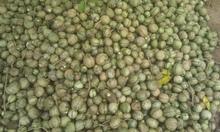 Voacanga Africana seeds