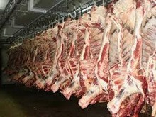 FROZEN HALAL BEEF / BUFFALO BONELESS MEAT OFFALS (FQ CUTS / HQ CUTS / COMPENSATED 60/40)