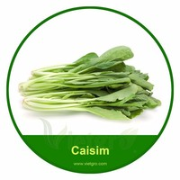 High Yield OP Caisim Seed VGCS 01 / Vegetable seed for planting