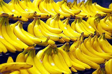 Best quality Cavendish banana from MDH' farm in Viet Nam