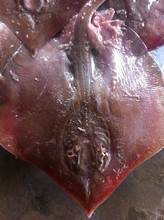Ray/Skate Wings Fish for sale