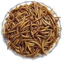 Dried Mealworms for sale