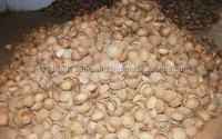 Coconut shell from Viet Nam(high quality)