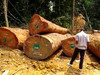 Quality Azobe , Teak , Sipo, dabema, movingui , kosipo , kosso, logs and lumbers for sell