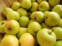 High Quality Fresh Grade A Gold apples for sell in bulk