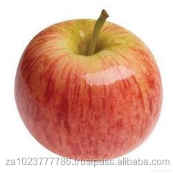NEWLY Harvest New season gala apple fruit Hot sales