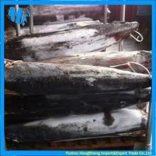 Frozen blue marlin fish for sale