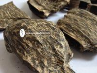 Vietnam High Quality Agarwood Plantation for sale