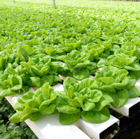 Soil Microbes for Improved Plant development in Hydroponic Farming