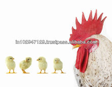 Probiotics for poultry animals farming