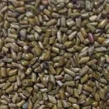 Venta caliente cassia semillas semen cassiae semillas