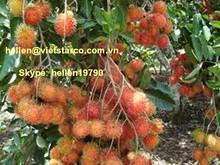 FROZEN RAMBOUTAN / TROPICAL FRUITS