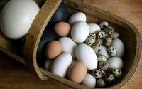 Fresh Quail Eggs ,fresh brown eggs