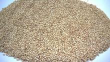 De semillas de sésamo blanco Natural