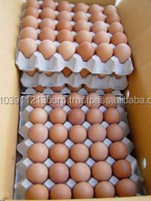 Fresh Brown Chicken Eggs and White and Brown Chicken Eggs, Fresh Table Eggs