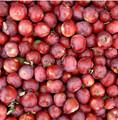 natural bioestimulante para maior produtividade por planta