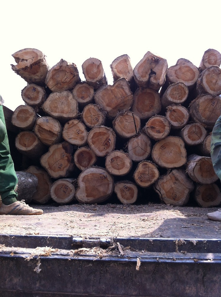 Wood Suppliers Vietnam Teak Wood Suppliers