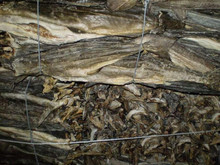 Quality stockfish Head for sale/best food and dried stock fish for sale