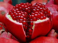 Indian seedless pomegranate