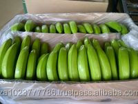 HIGH QUALITY FRESH CAVENDISH BANANA GRADE a FOR SALE HOT SALES