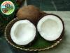 Vietnam Export Quality Frozen Mango With Reasonable Price Individual Quick Frozen Coconut Meat