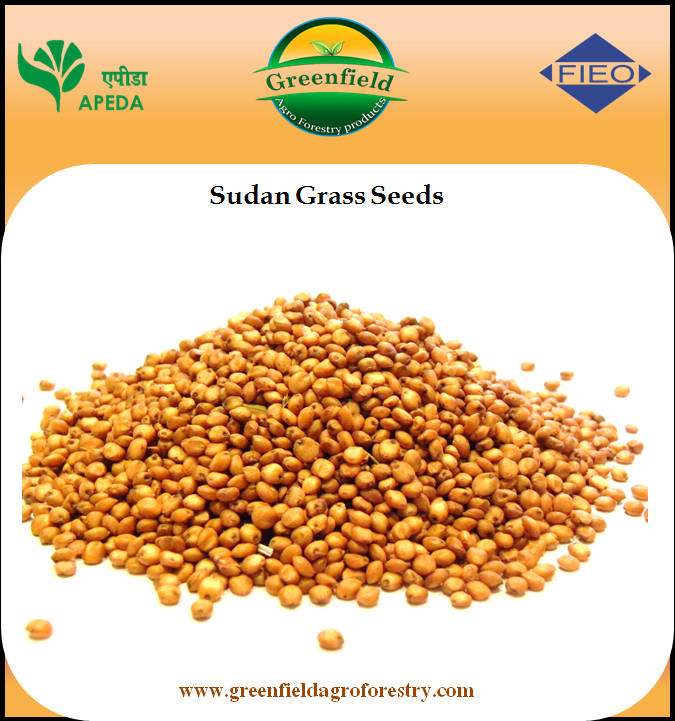 Sorghum Sudan Grass Seed Price In India
