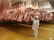 Halal Frozen Beef from Brazilian