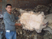 Merino Sheep skin